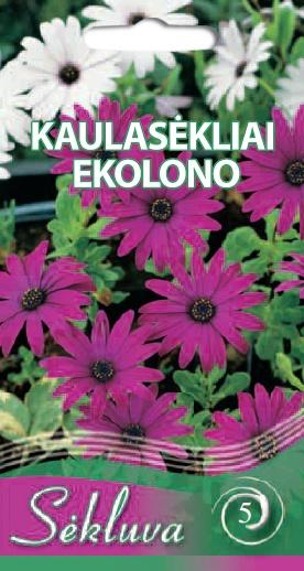 EKOLONO_KAULASEKLIAI