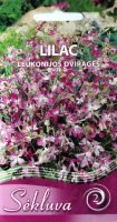 Dviragės leukonijos Lilac