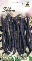 Žemaūgės daržinės pupelės Purple Queen