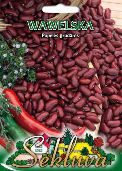 wawelska