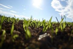 Kaip paruošti substratą sėjai ?