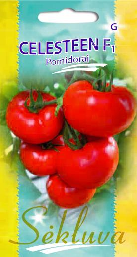 Pomidorai Celesteen F1