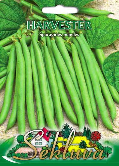 Sparagines pupeles Harvester